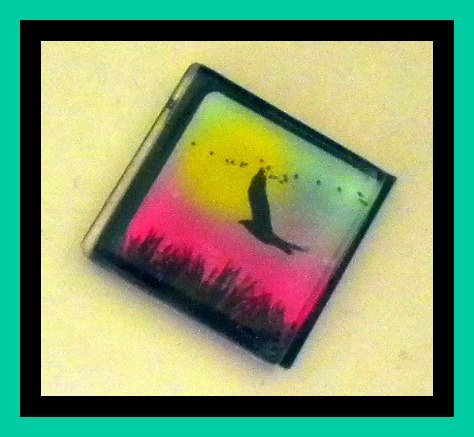 Magnet - Bird - 1 Inch Glass Square